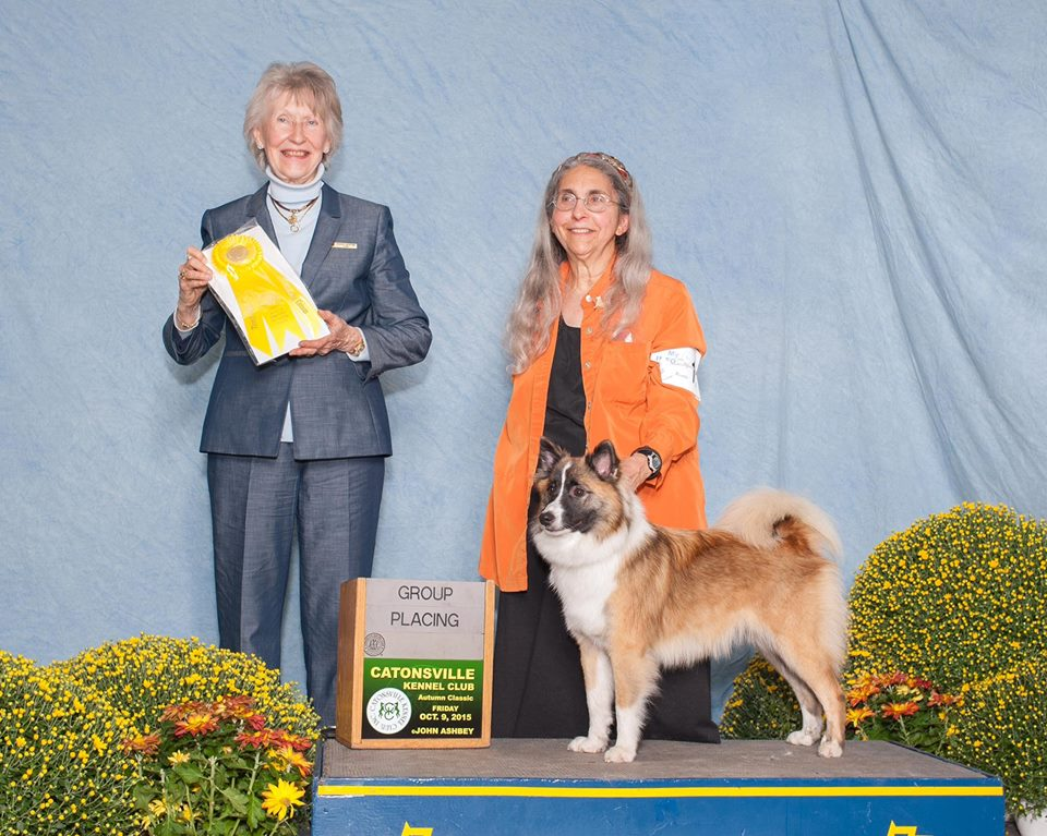 I am also the Founder and President of the Board of Directors of the rescue organization for Icelandic Sheepdogs, National Icelandic Sheepdog Rescue ...